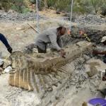 Fósil dinosaurio provincia de Burgos